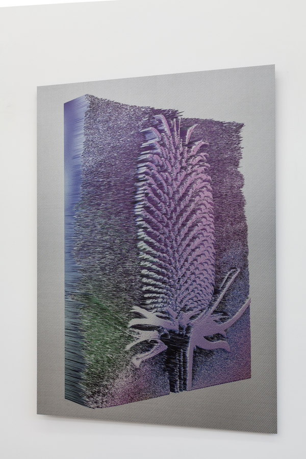 Spiros Hadjidjanos - Dipsacus Fullonum - Ultraviolet Print on Carbon Fibre; Three Rooms