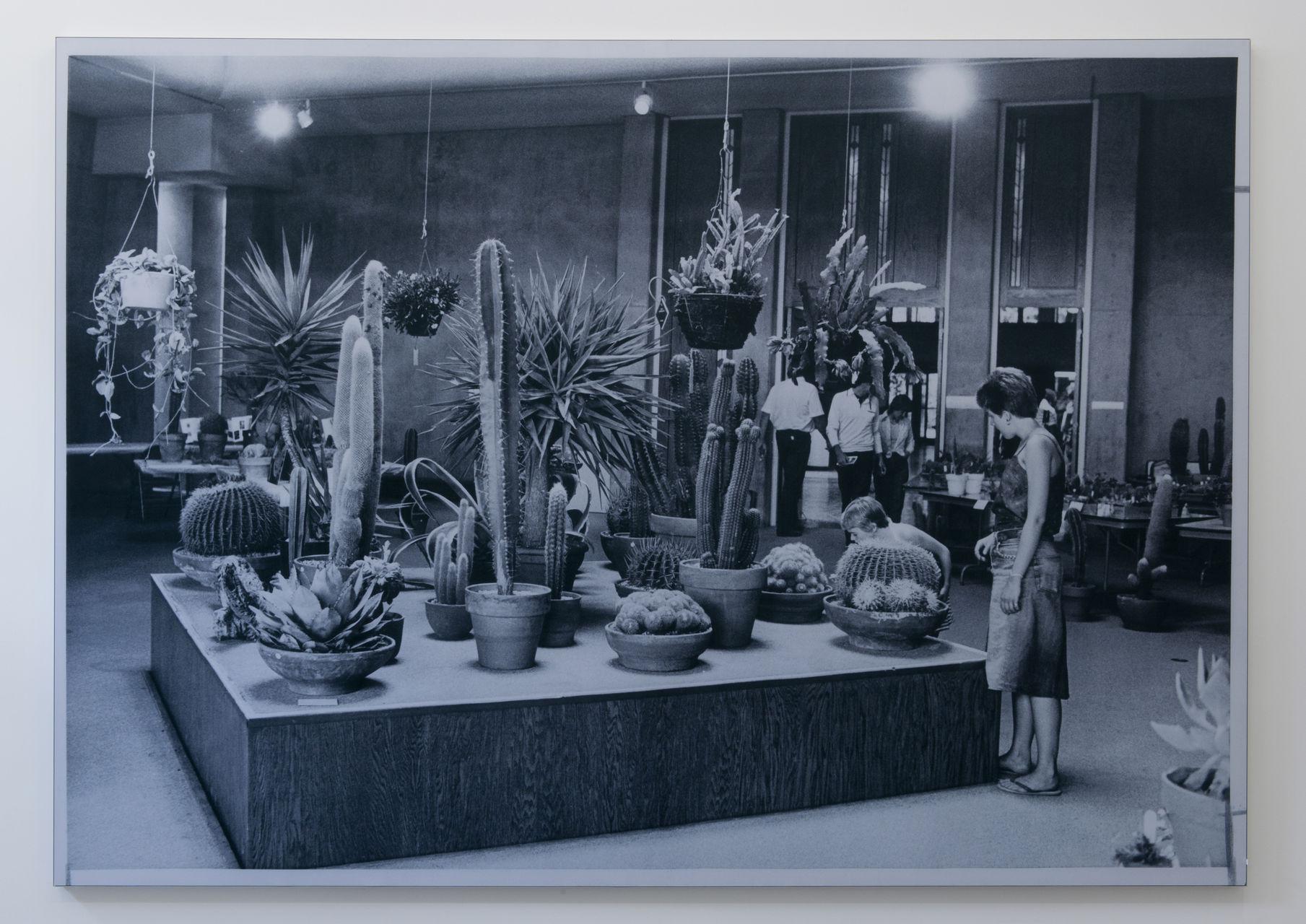 Serandour-Yann-Cactus_Show__Sale_2014
