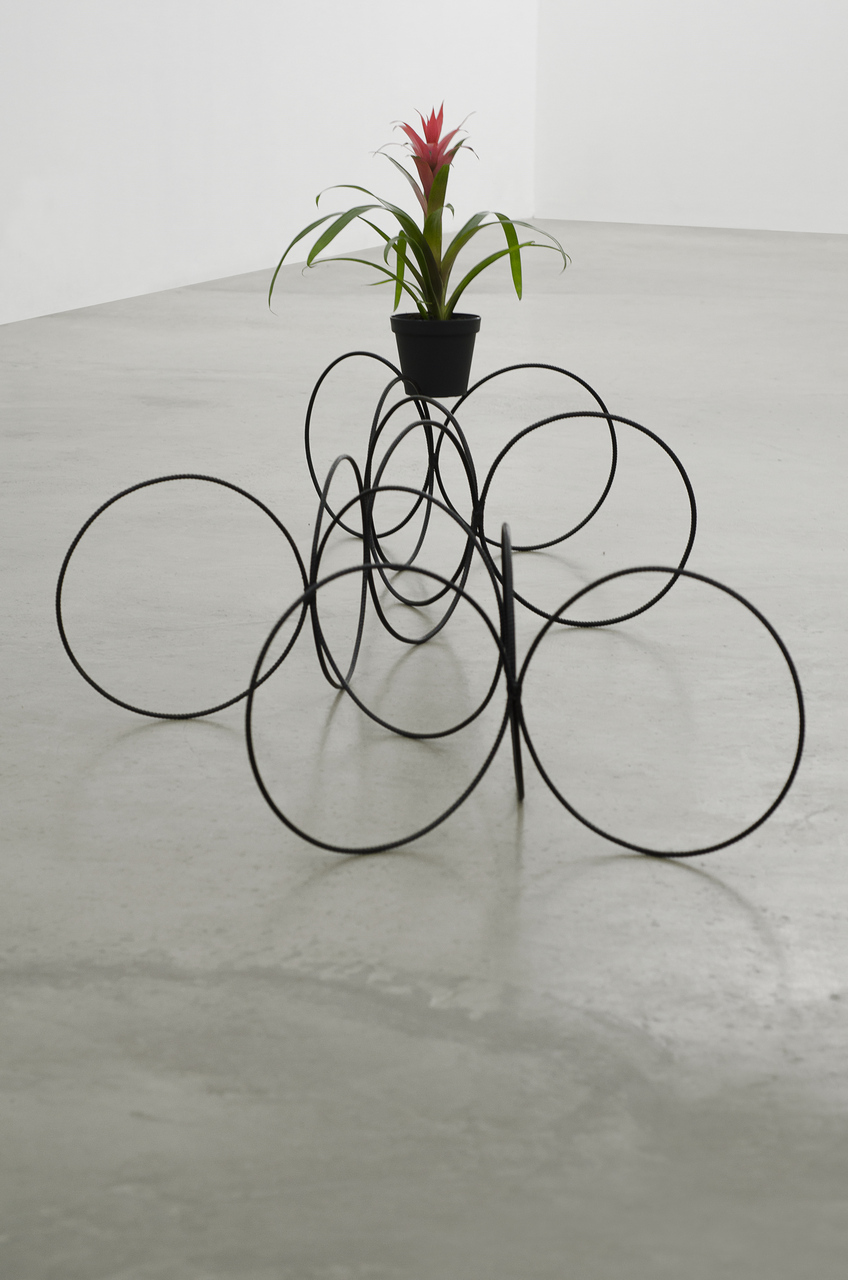 Vlad Nanca, 12 rings, 2015