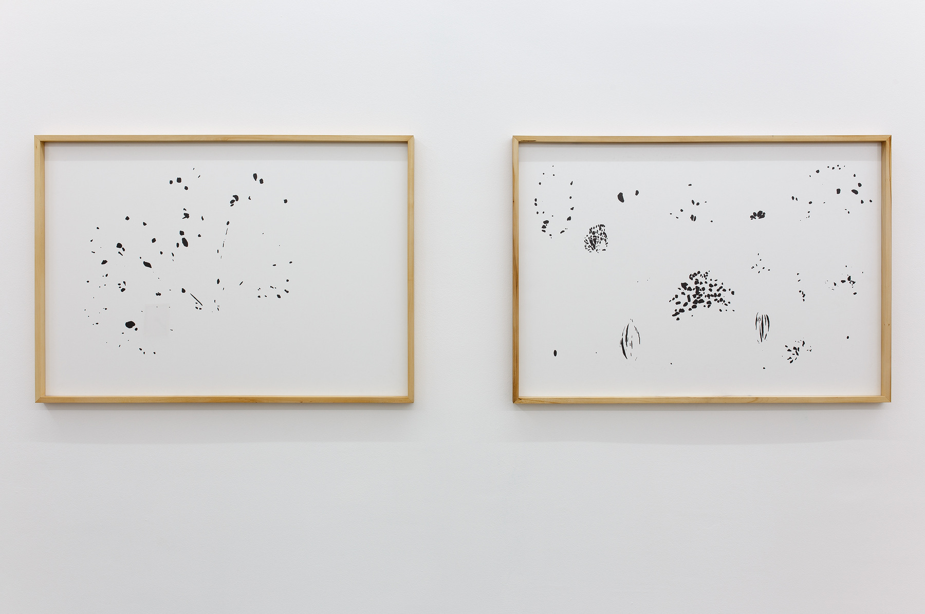 Drawings from caterpillars, 2015, ink on paper, 100 x 70 cm each