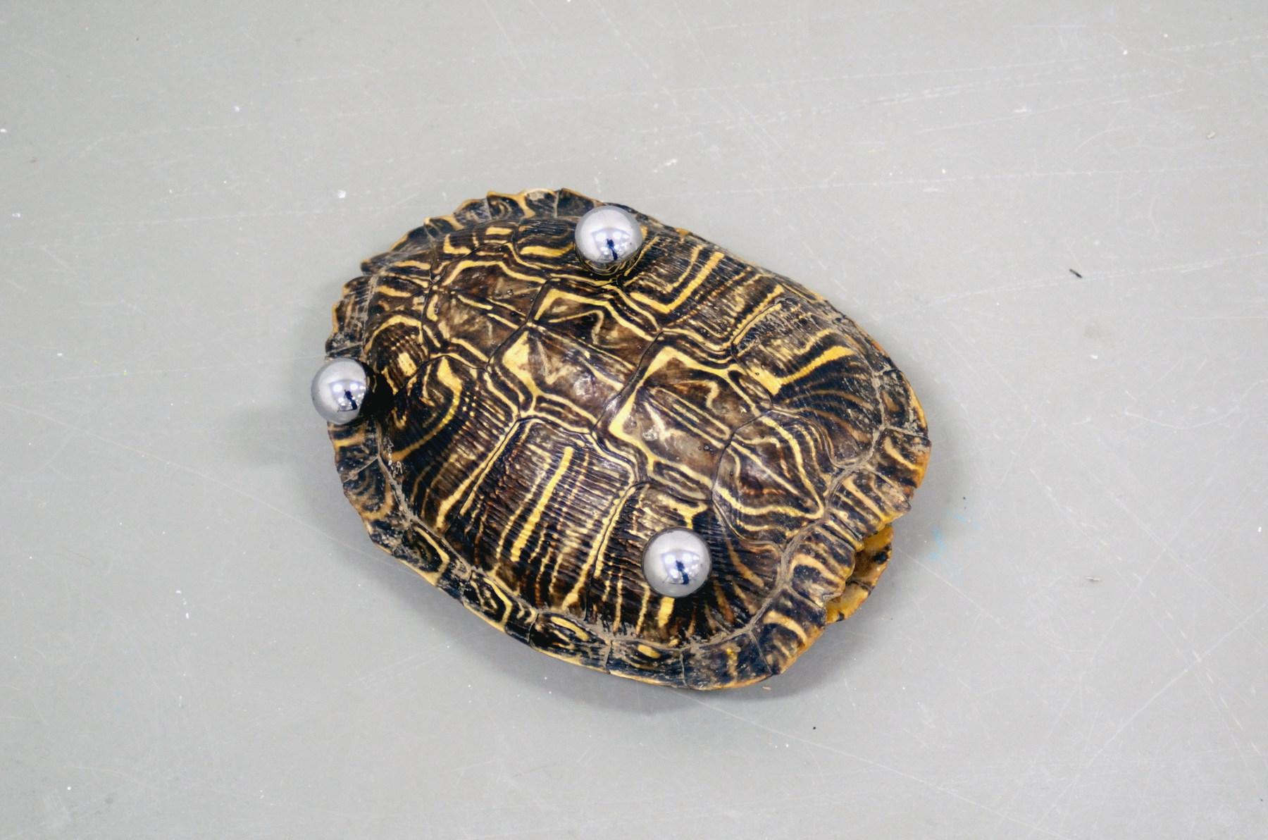 kasper Bosmans schildpad 1
