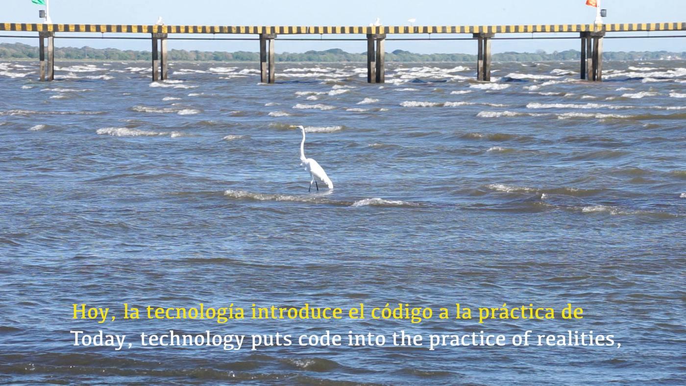 020 Judy Radul_Birds of Nicaragua 5 today technology