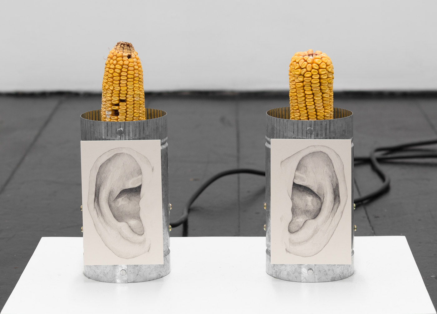 Chapter NY JS Ear Wiggler (crop)