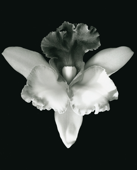 Mapplethorpe, Robert