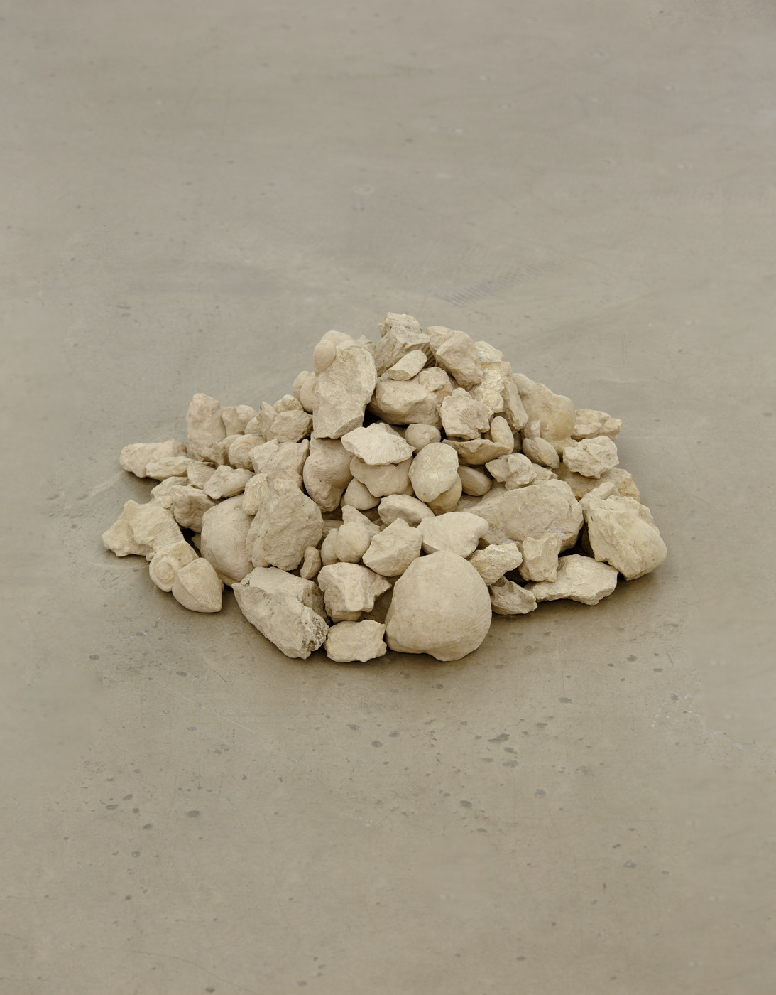 16. Larisa Sitar, Untitled, 2016 (collection of fossils, 50% real, 50% fake)