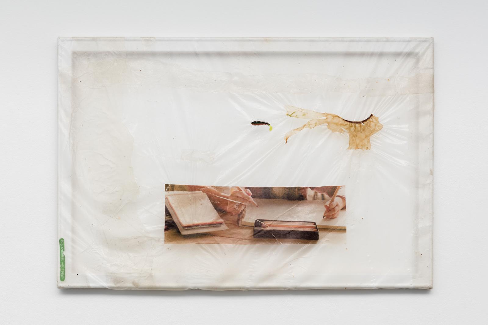 13.Aude Pariset. Leçon de Vie (Bio Qualität), 2016. Bioplastic, UV print on bioplastic, fish bait, seaweed, wood, paint. 60 x 90 cm
