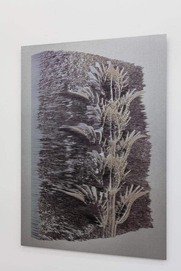 Spiros Hadjidjanos - Acanthus Mollis - 2015; Three Rooms, Galerie Gabriel Rolt