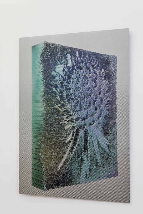 Spiros Hadjidjanos - Scabiosa Columbaria - Ultraviolet Print on Carbon Fibre - Three Rooms