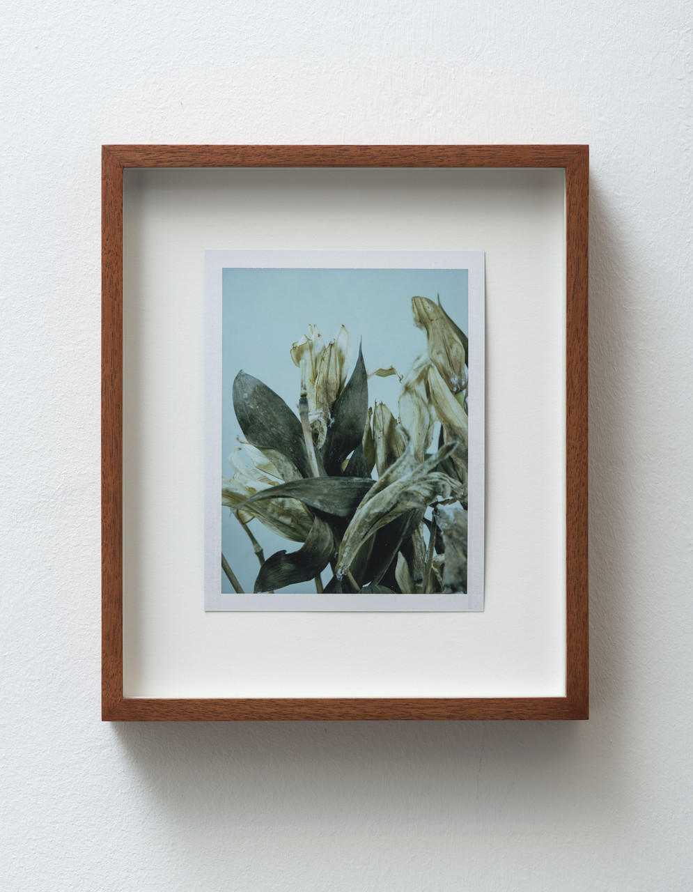 7_FG_Falls_Untitled (Life and death, Easter lilies)_diptych_B