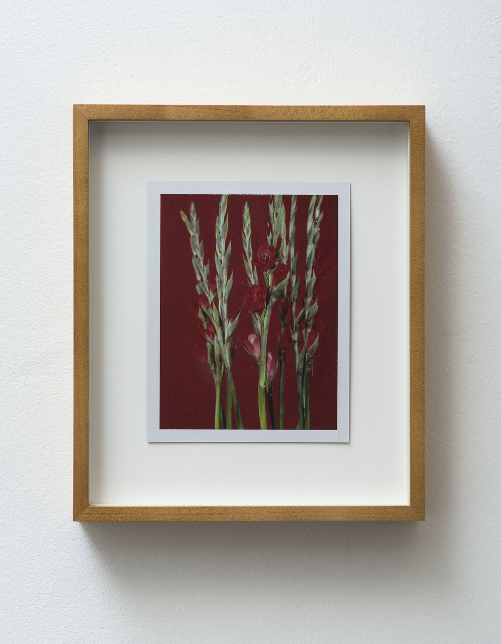 8_FG_Falls_Untitled (Life and death, gladiolas)_diptych_A