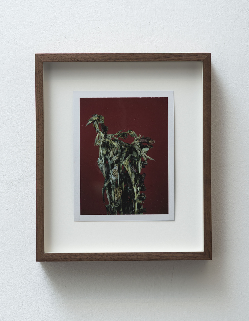 8_FG_Falls_Untitled (Life and death, gladiolas)_diptych_B