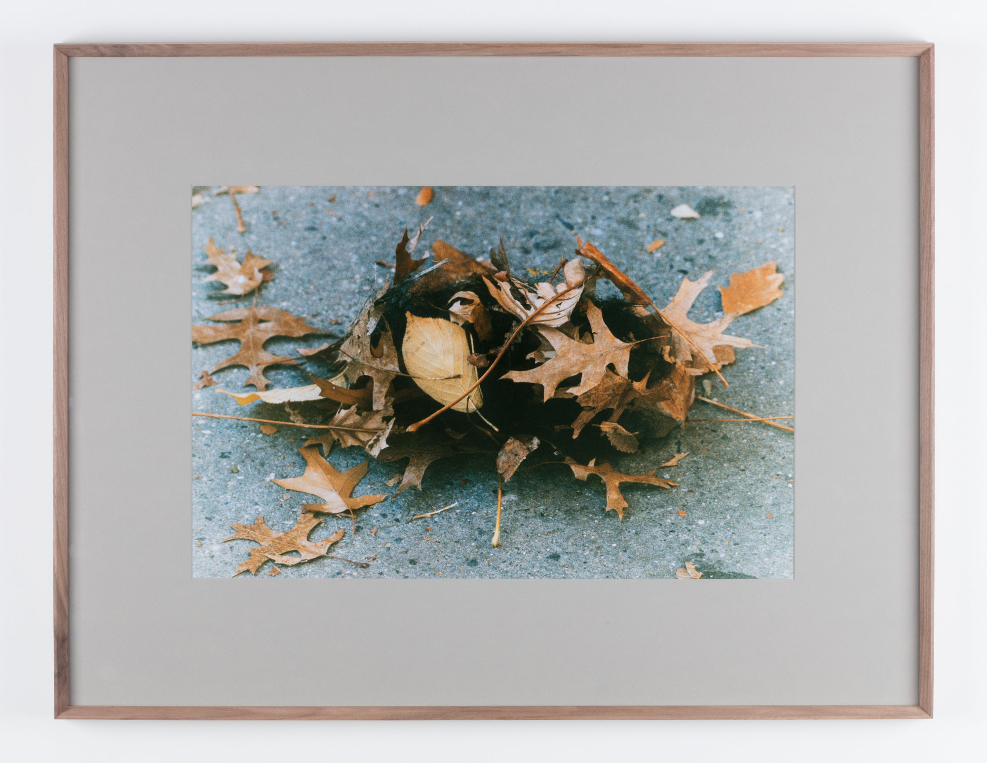 1.Oto_Gillen_Tomorrow_Leaves-2000