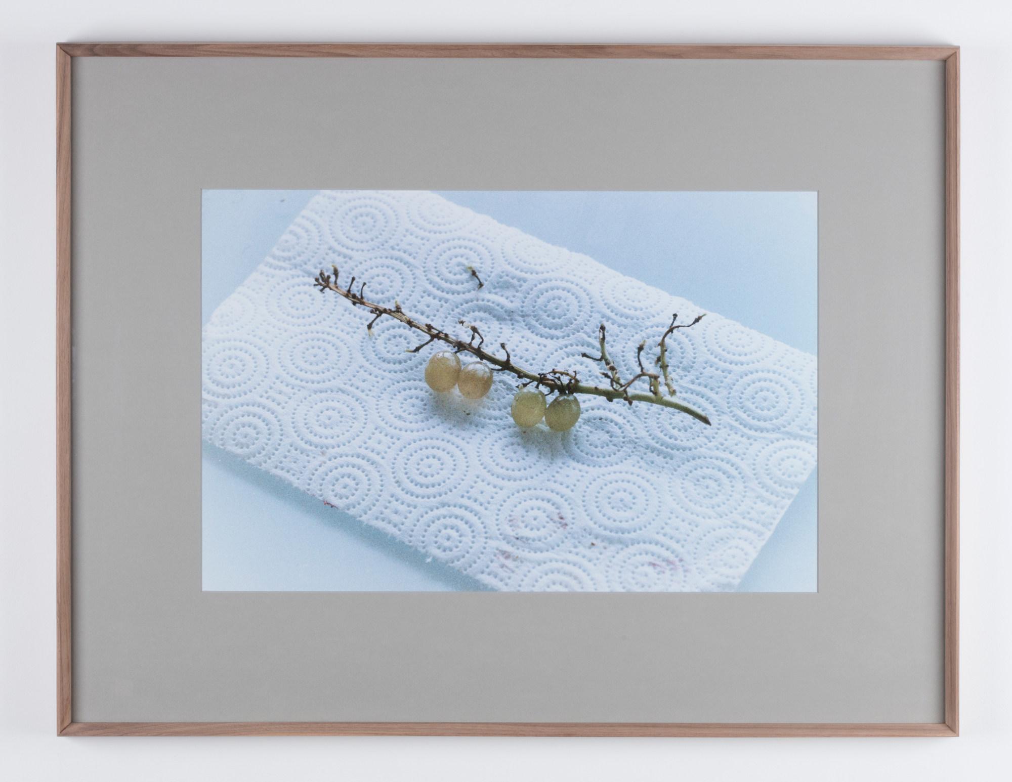 2.Oto_Gillen_Tomorrow_Grapes-2000