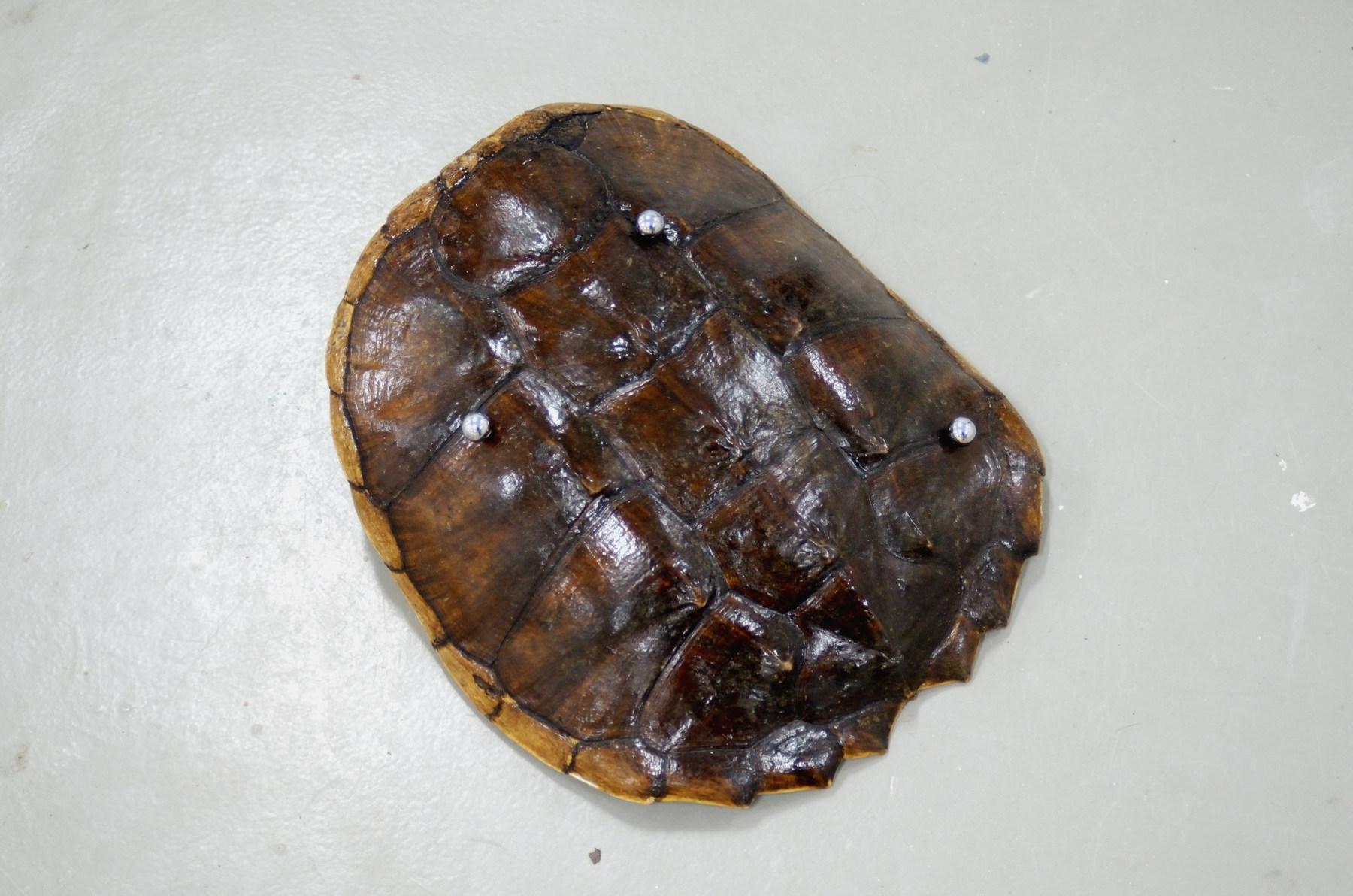 Kasper Bosmans schildpad 2